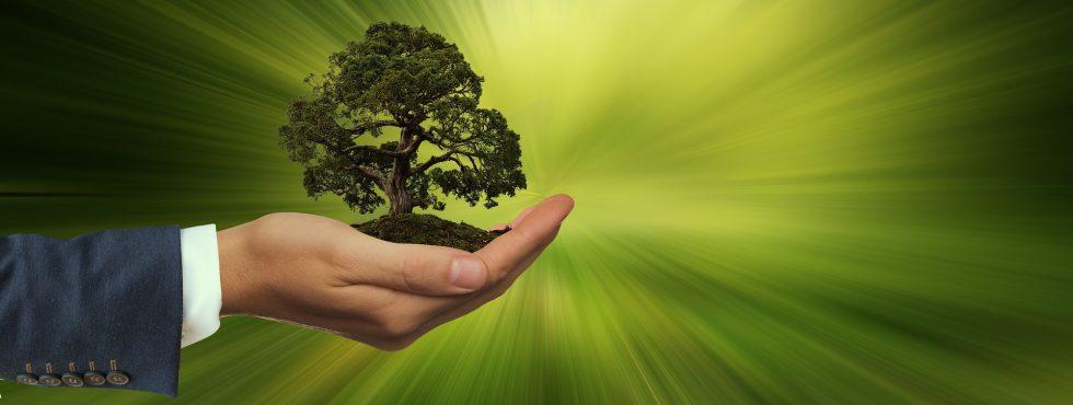 Sustainability 3303398 1920