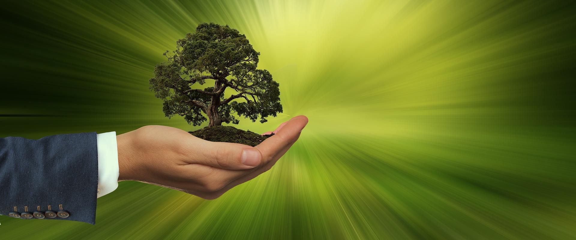 Aplicação Do Plano De Ação Florianópolis Sustentável