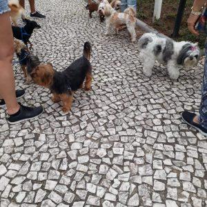 Cães Na Praça Do Kobrasol