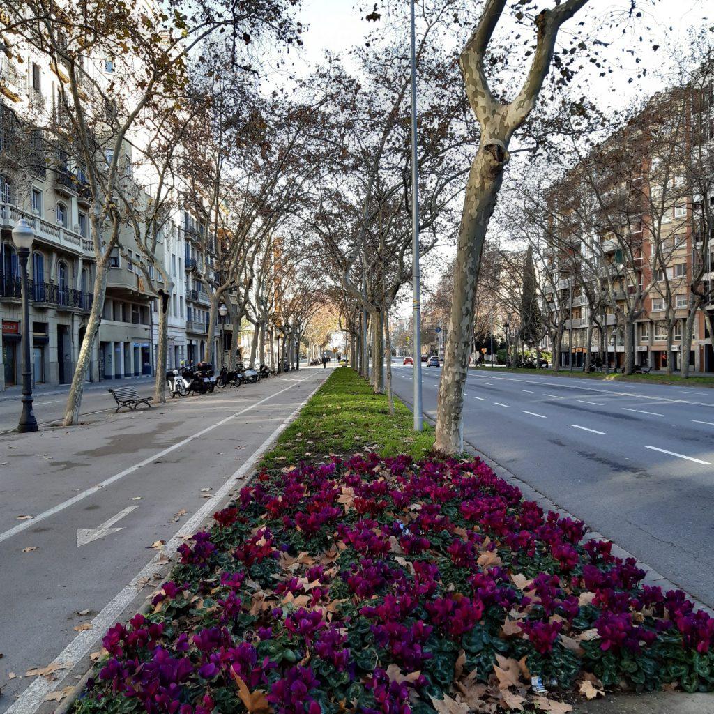 Avenidas Largas Com Pistas Exclusivas Para ônibus E Taxis Fazem Parte Da Cidade