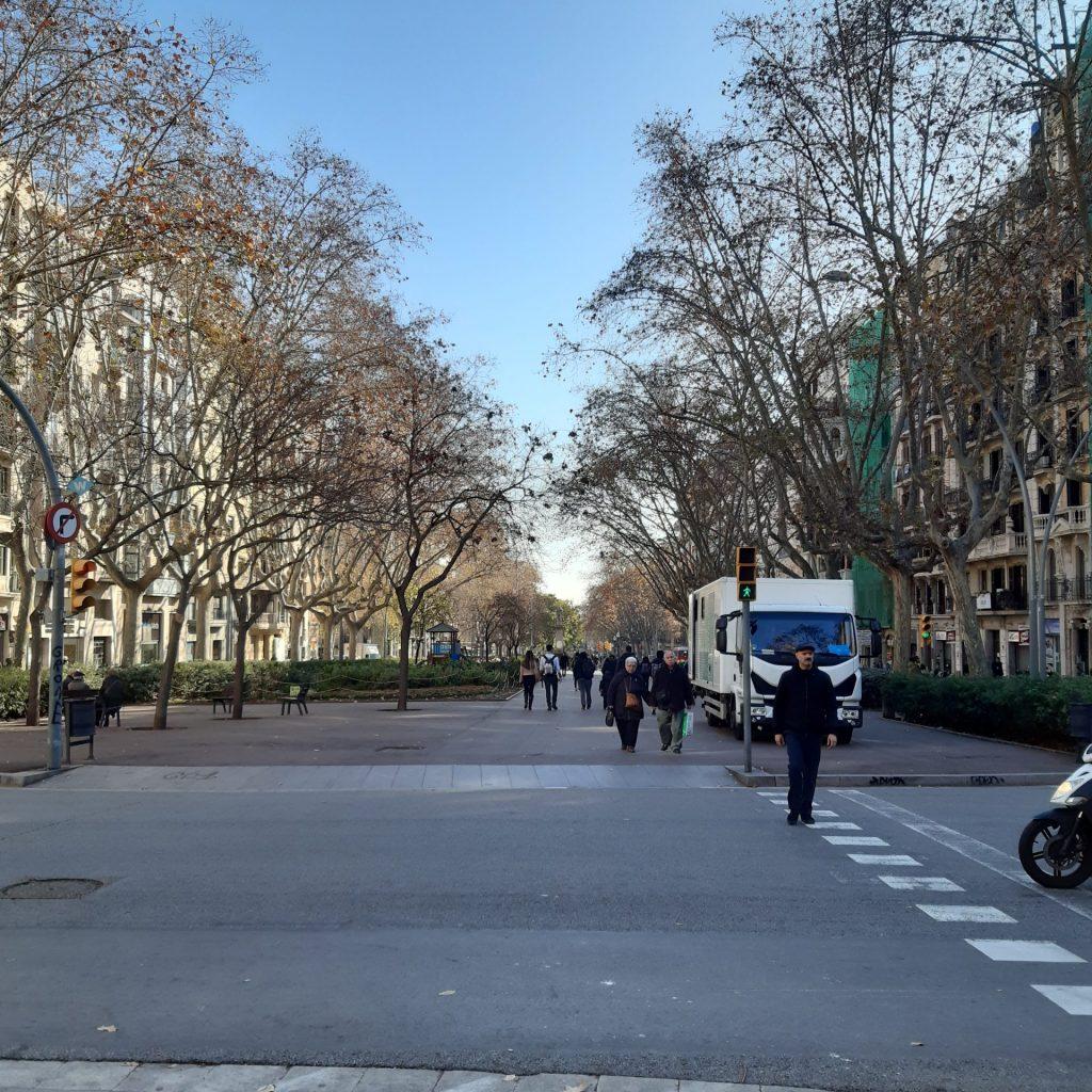 Arborização Das Vias Garante Um Conforto Térmico E Permite Uma Melhor Qualidade No Trajeto