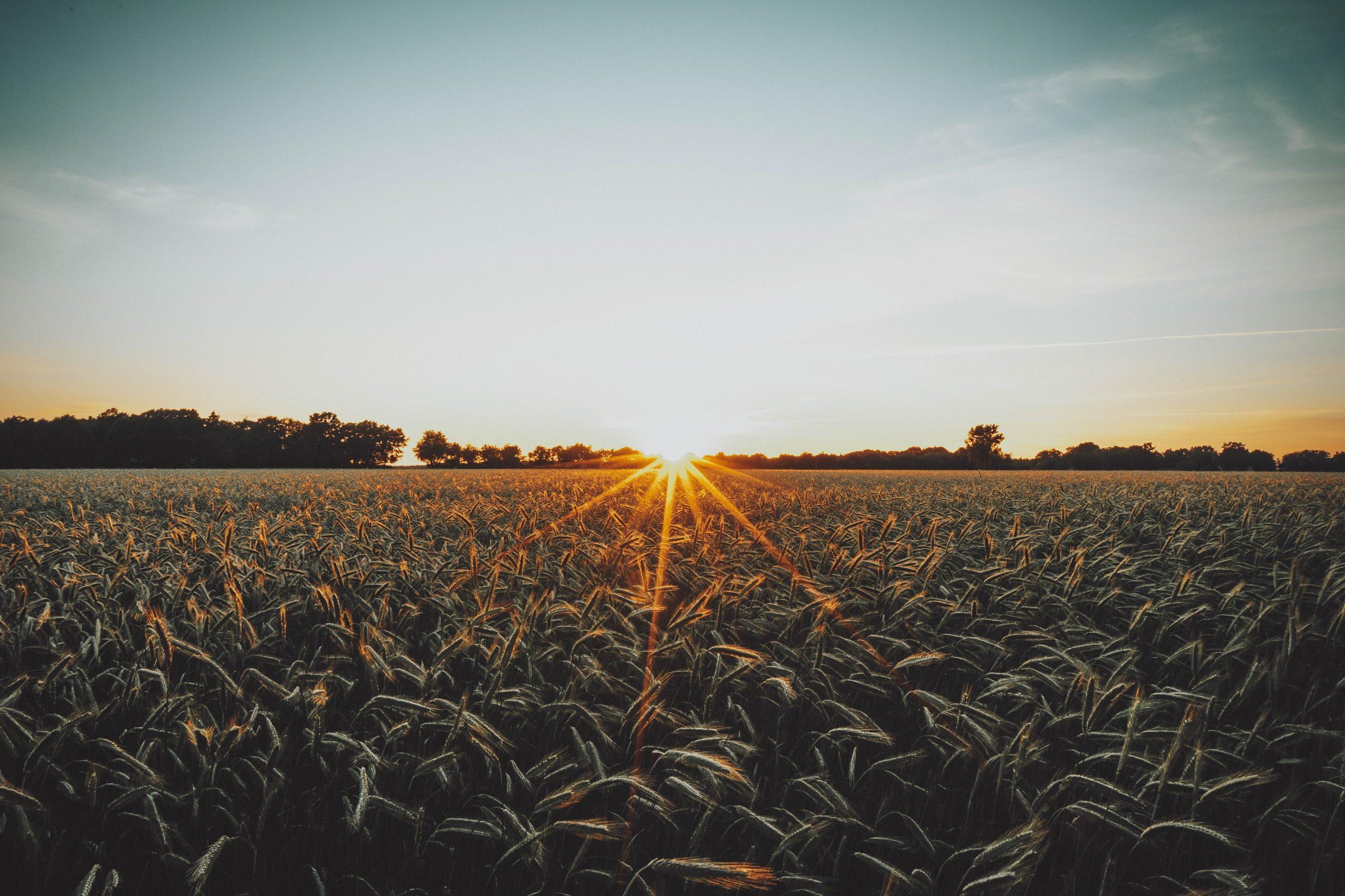 SAR E Vinculadas Lançam Programa Agroinovação SC