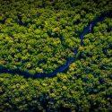 Bioeconomia Na Amazônia